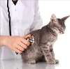 Ветеринарные клиники в Большом Сорокино